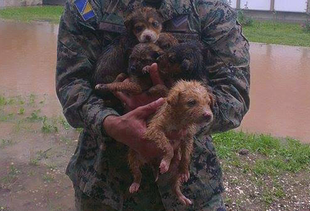 A Bosnian soldier with puppies he rescued from the flood waters.