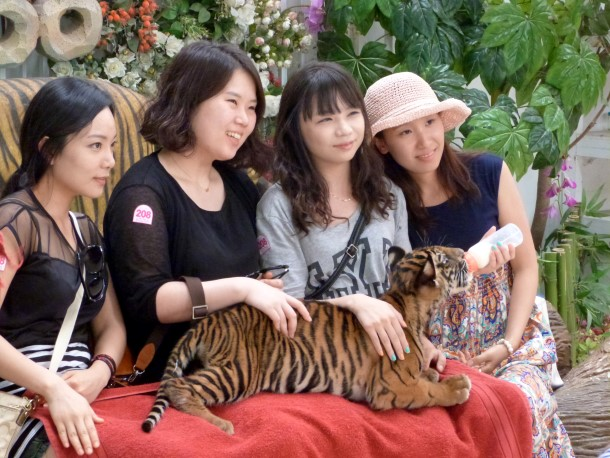 Tourists pose with a tiger cub at the Tiger Zoo, Sriracha, Thailand.