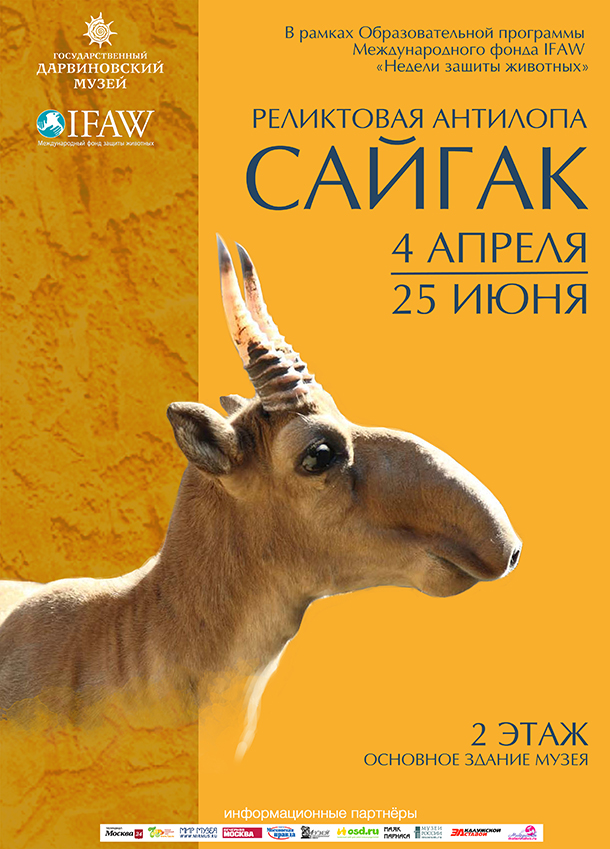 """""""Saiga: Fossil Antelope"""" at the State Darwin Museum from April 4 through June 25, 2017, is expected to be visited by more than 60,000 people."""