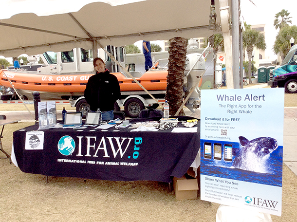 IFAW in Jacksonville, Florida this past weekend for the 6th Annual Right Whale Festival.