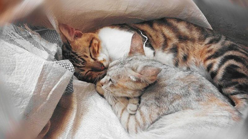 cats cuddling