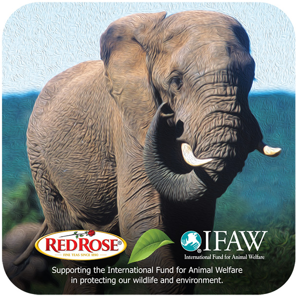 Redco Foods, Inc., parent company of the Red Rose Tea brand supports the International Fund for Animal Welfare's global mission. In this partner spotlight, Abby Possigner, a member of the Red Rose Tea Family offers some insights as to how their company values align with ours.