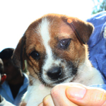 Protection – and a new home! – for Rocky