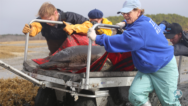 IFAW's marine mammal stranding rescue and research program relies heavily on Prescott grants which have been spared in the recent bipartisan compromise to keep the government funded through September.