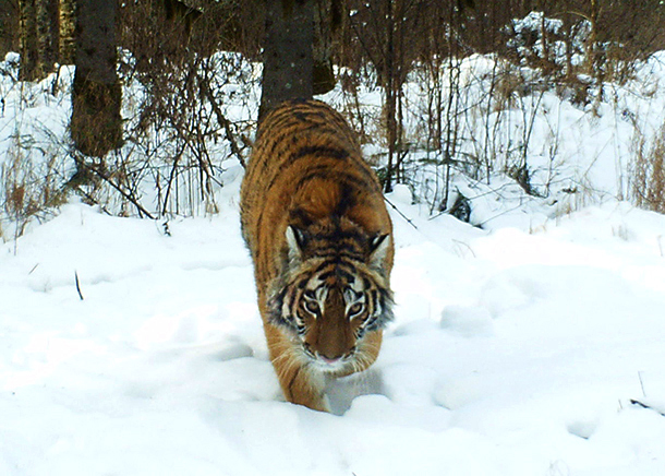 Zolushka. © Bastak Nature Reserve