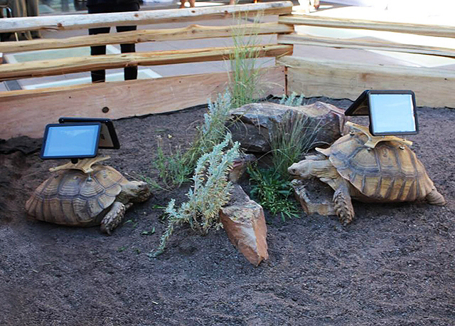 An iPad glued to the shell of a tortoise does not indicate respect for the individual animal.