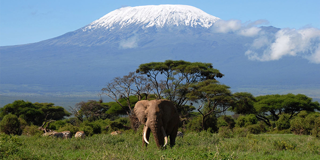We now have a UK ivory ban!