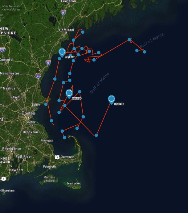 Satellite tag data show the dolphin swimming safely in open waters.
