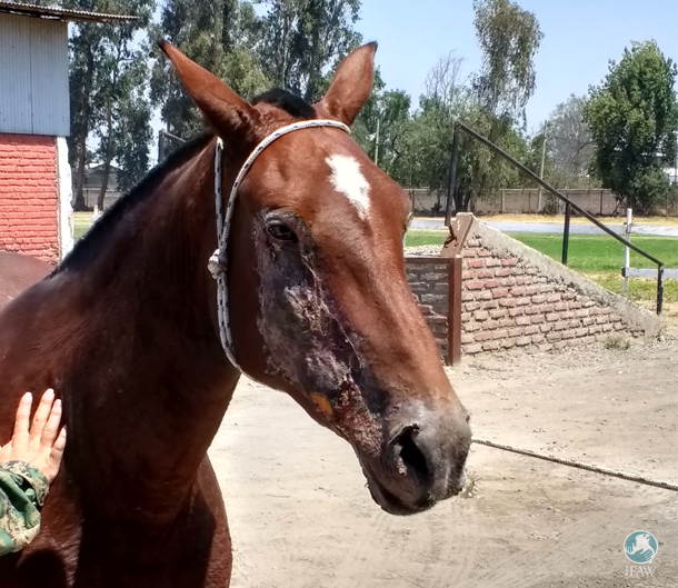 Dulce was rescued out of Santa Olga, badly burned and visibly in pain.