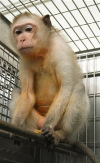 USDA Slams Bristol-Myers Squibb With Fine Over Monkey Deaths