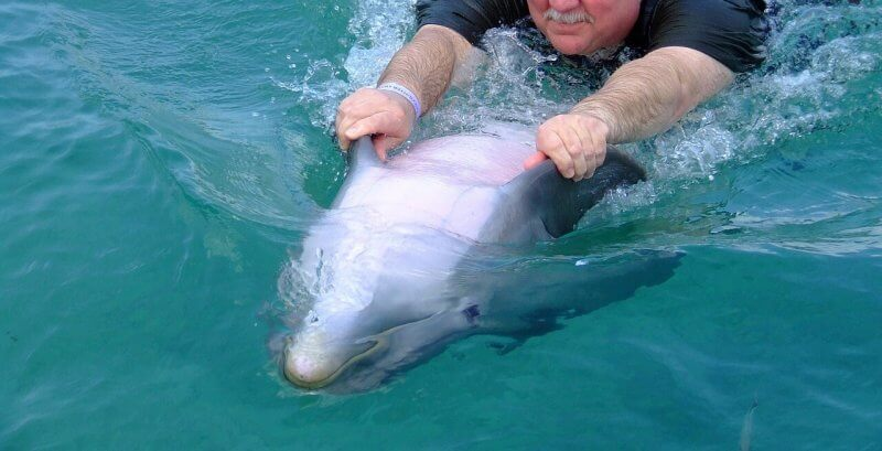 Swimming with dolphins is cruel
