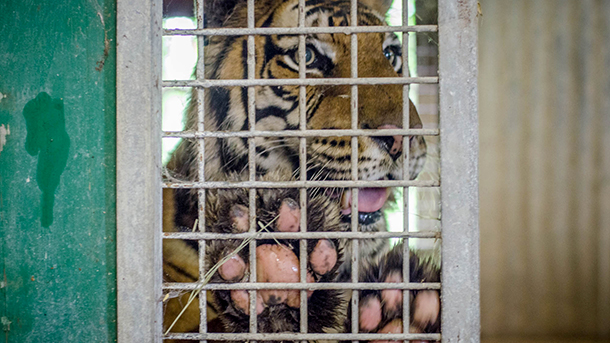 "The author of the bill describes it as ""a common-sense solution to the inhumane, dangerous, and wasteful practice of private ownership of big cats."""