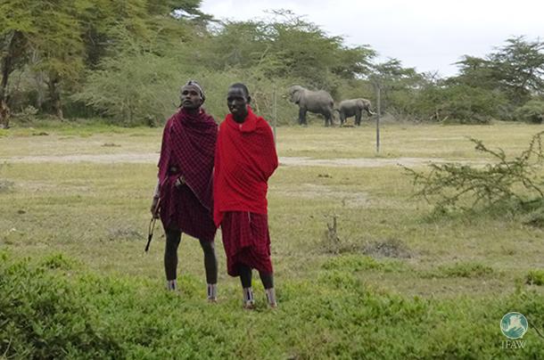 maasai people living alongside elephants in amboseli national park in kenya