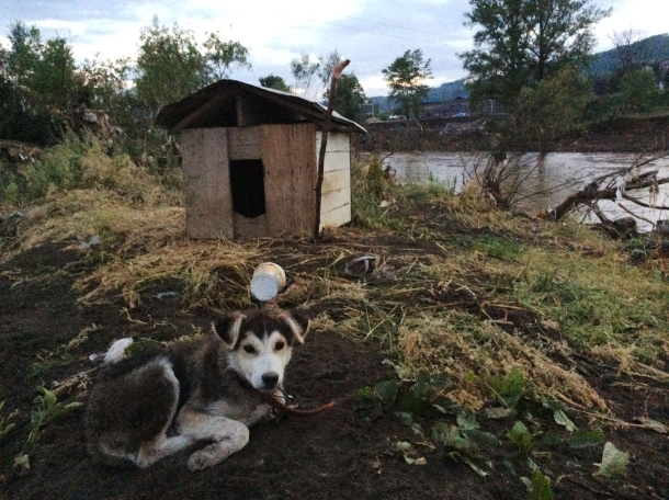 During the aftermath of the devastating floods in Bosnia, IFAW's rescue team encountered this recovering puppy. Weeks later, James and Becky attended conferences to guide community members in finding humane solutions to their dog problem.