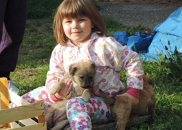 Two of those puppies now quite grown up – healthy…and both neutered!