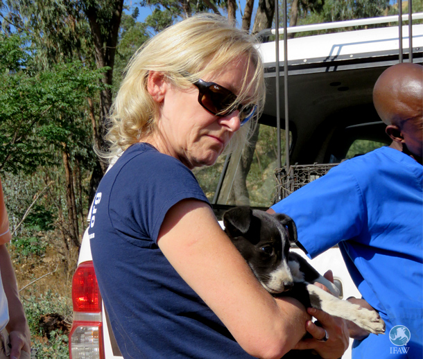 A CLAW team member carefully holds a newly rescued puppy. The puppies were rescued near a dumpsite in South Africa.