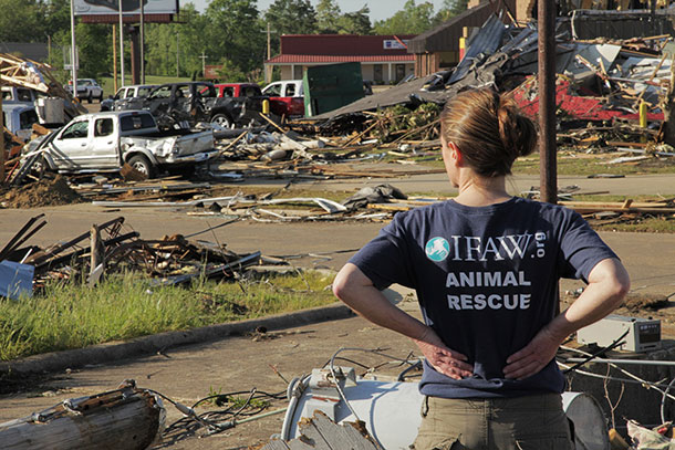 IFAW disaster team leader Denise Bash surveys the destruction at Tupelo, Mississippi.