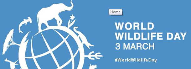 Be sure to tweet this post in support of #WorldWildlifeDay -!