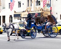 Ban Horse-Drawn Carriages in New York City