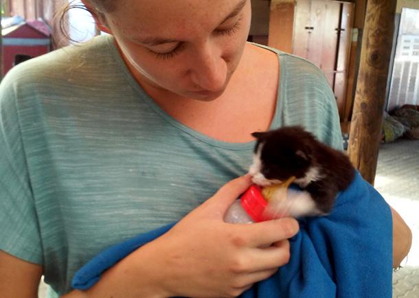 The author bottle feeding an abandoned kitten brought to Mdzananda
