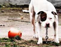 Support stronger animal fighting laws