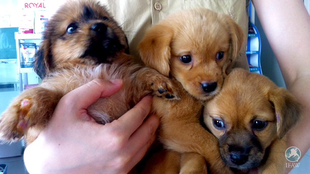 Happiness is an armful of puppies, which is being prioritized and measured through initiatives such as the Charter for Happiness.