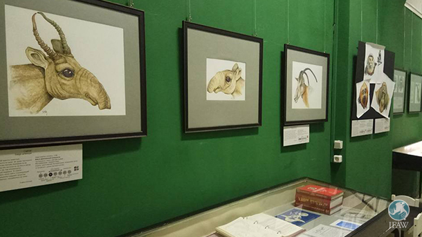Shukhova's wildlife portraits on exhibit at the Zoological Museum of Moscow University.