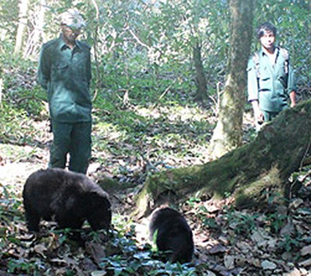 IFAW animal keepers, Lakhiram Bhuyan and Rama Umpo, follow orphan bears acclimatizing to wild