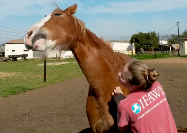 One of Tom-Ro's regular volunteers, the author's daughter Robyn Cant-Haylett, with Dreamer – giving her a good scratch and some love.