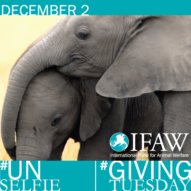 This #GivingTuesday you can help animals all over the world, share this image! Right click and save as then upload to your favorite social network!
