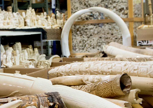 Leboncoin will prohibit the sale of ivory.