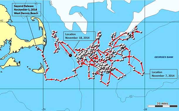 Dolphin 'IFAW14-149Dd' has been tracked swimming up to 100 miles offshore.