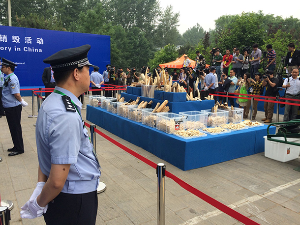 China State Forestry Administration (SFA) and General Administration of Customs (GAC) crushed 662 kg confiscated ivory