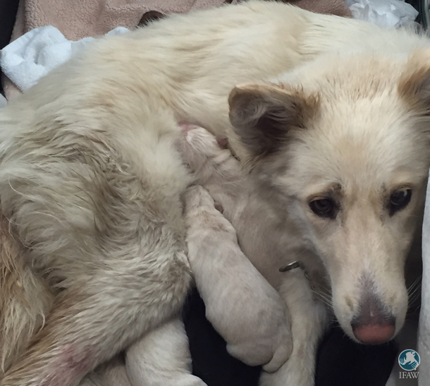 Fran has been an amazing mother to pups Jan, Ann, Nan, Van, Stan and Dan.