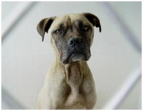 Dogs Allegedly Abandoned and Starved to Death