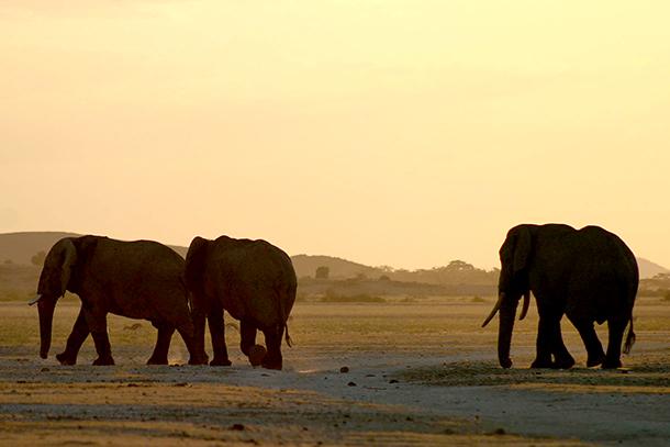 A bit of sunset bromance: a friendly jostle between males.