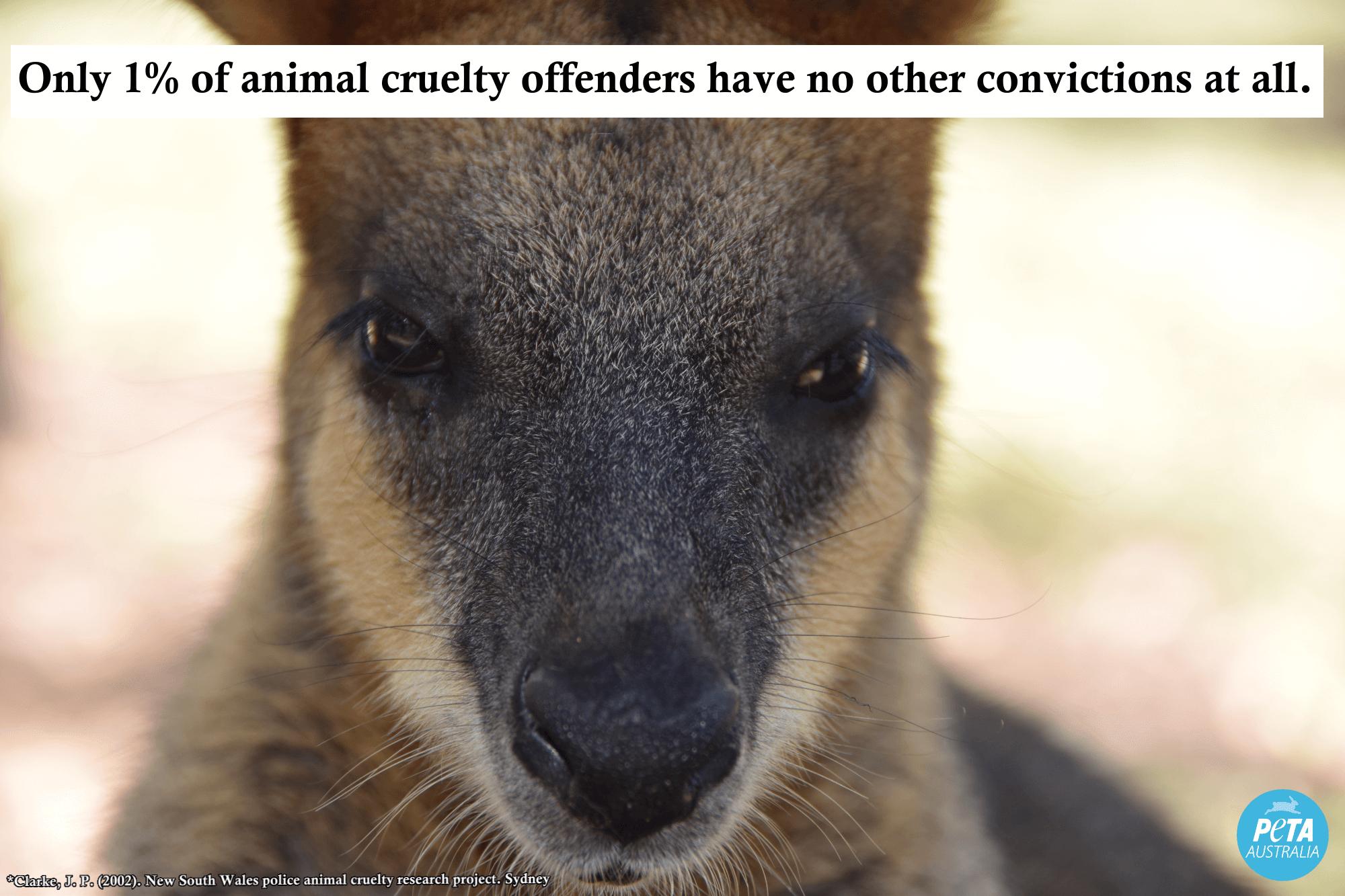 kangaroo animal abuse stat