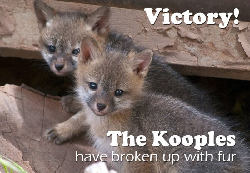 the-kooples-drops-fur