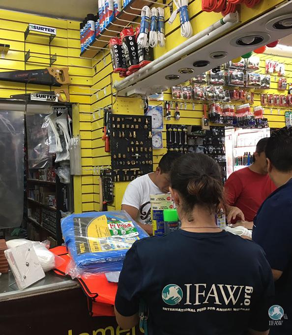IFAW Disaster Response: Earthquake in Mexico