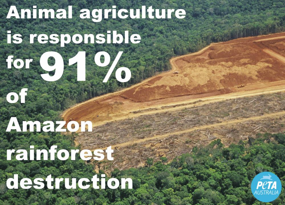 Amazon Rainforest Statistic PETA Australia