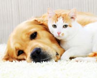 New York: Act Now to Strengthen Animal Cruelty Laws