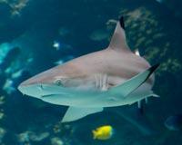 California: Ban the Sale of Shark Fins