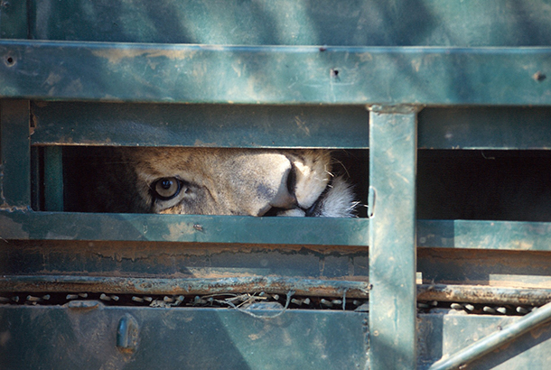 If we don't act now, South Africa could well end up in the shameful situation of having over 12,000 large predators in captivity by 2020.