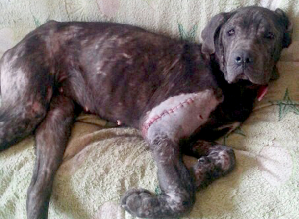 Aisya pulled through emergency surgery and has started her long road to recovery.