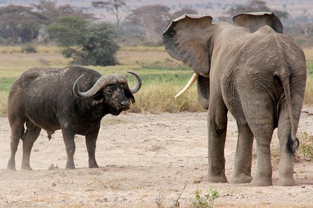 Elephants don't always choose willing playmates.