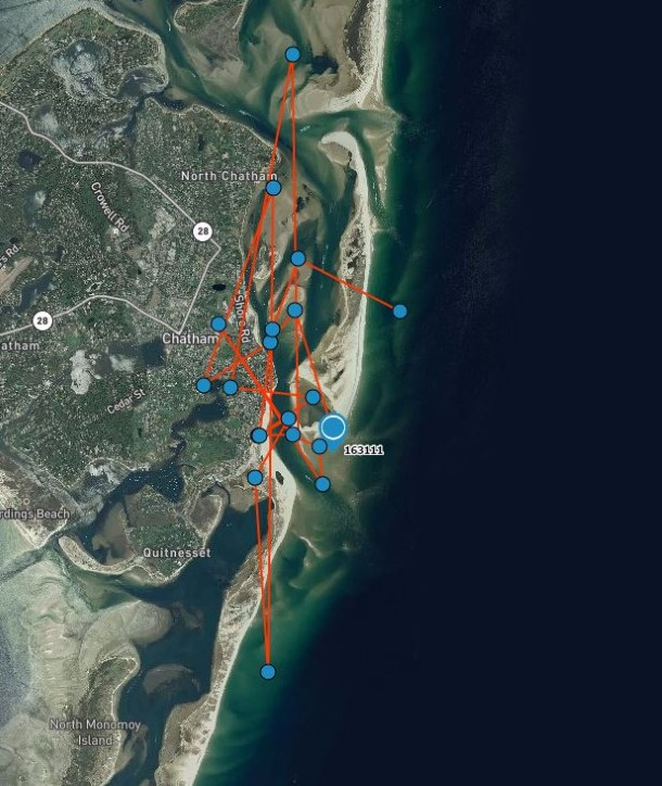 Data shows Sausalito has stayed pretty close to Chatham harbour since her rescue.