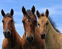 Stand Up for Horses