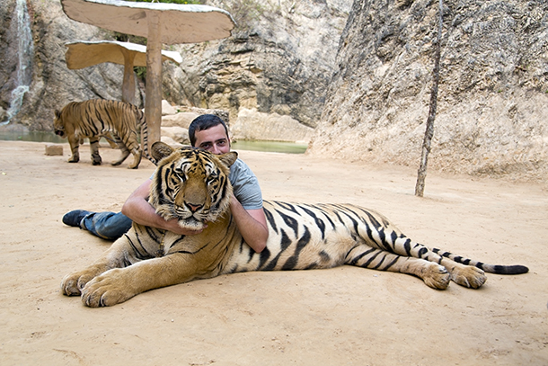 A man poses with a tiger at a facility in Thailand that allows photos with tigers.