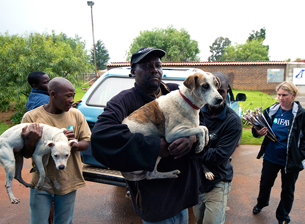 The community of Durban Roodepoort Deep, where CLAW has its premises, erupted into violent protest against likely eviction from their homes after the sale of the former gold mine. IFAW/Shayne Robinson.
