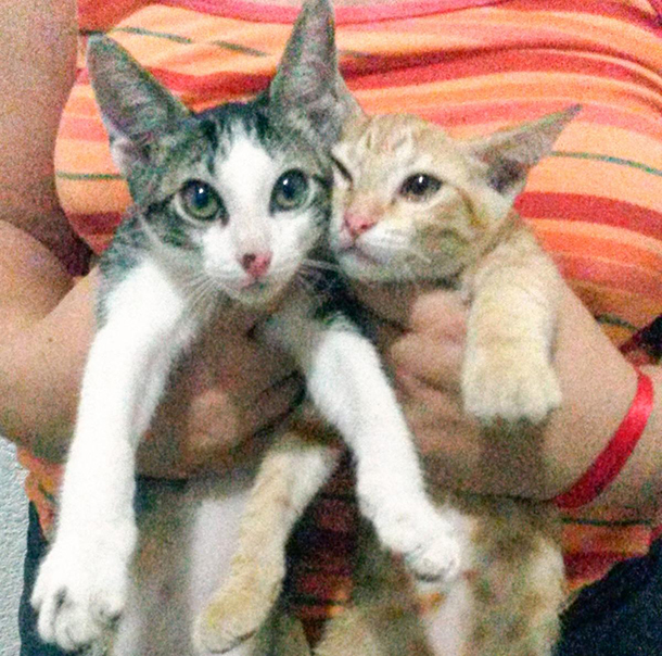 The rescued cat now happily reunited with its sibling.